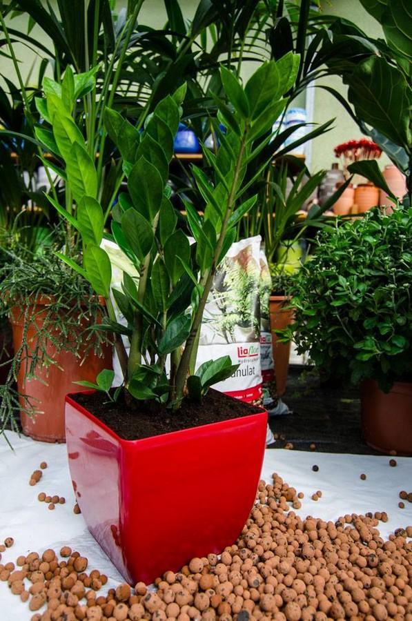 Liaflor - kruszywo do celów ogrodniczych 8